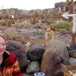 Chien, corail, cactus, repas, île, désert de sel, Uyuni, Bolivie