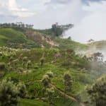 Sri Lanka, Asie, voyage, randonnée, Terdav