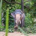 Esala Perahera, Sri Lanka, Kandy,
