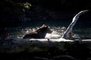Canada, Colombie Britannique, nature, animaux